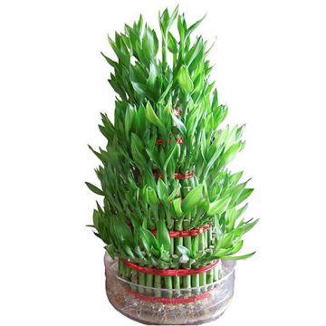 5 Layer Bamboo