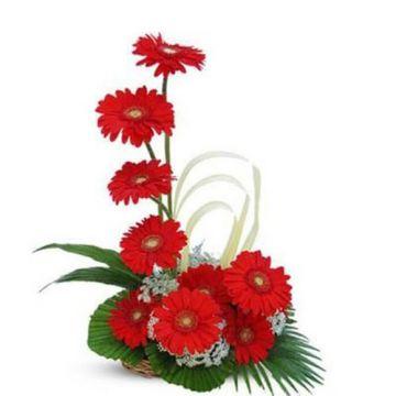 Red Gerbera Basket