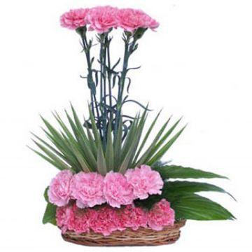 Cozy Carnation