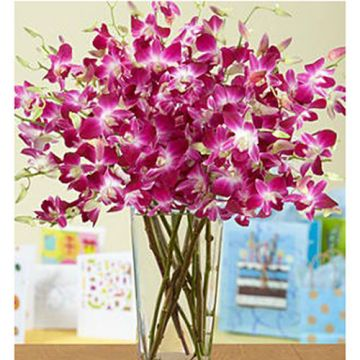 Delightful Orchids