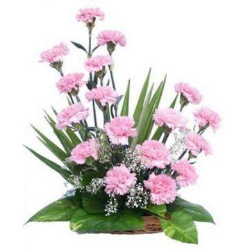 Light Pink Carnations