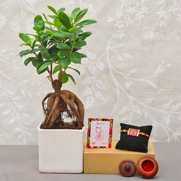 Bonsai Rakhi Gift