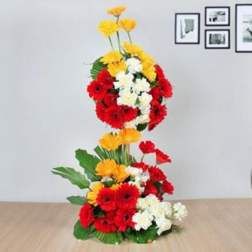 Heights of Carnations and Gerbera