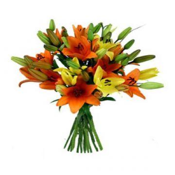 Mixo lilies
