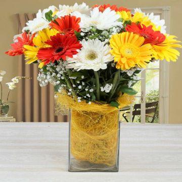 Mixed Gerberas Vase