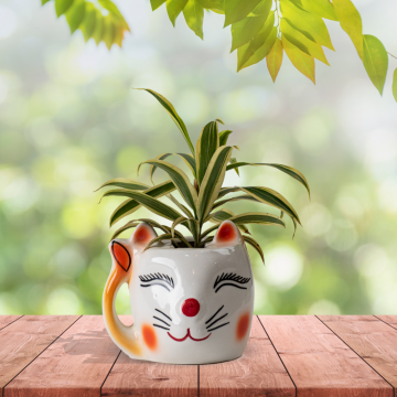 Quirky Cat Planter