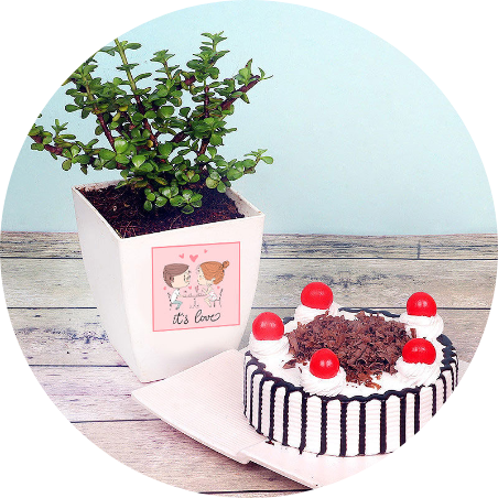 Blackforest cake with Plant