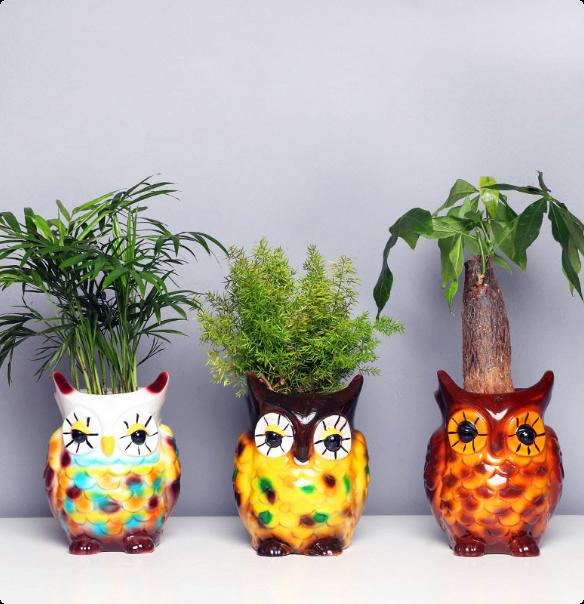Triple Foliage Plant