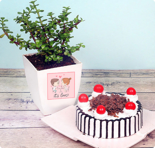 Plant with Cake