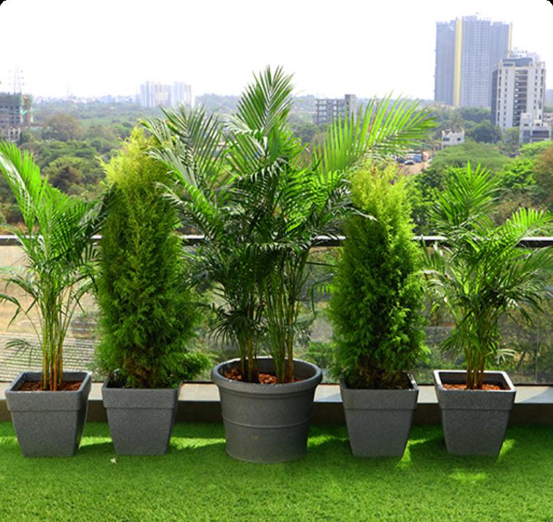 Plants for Terrece and Balcony