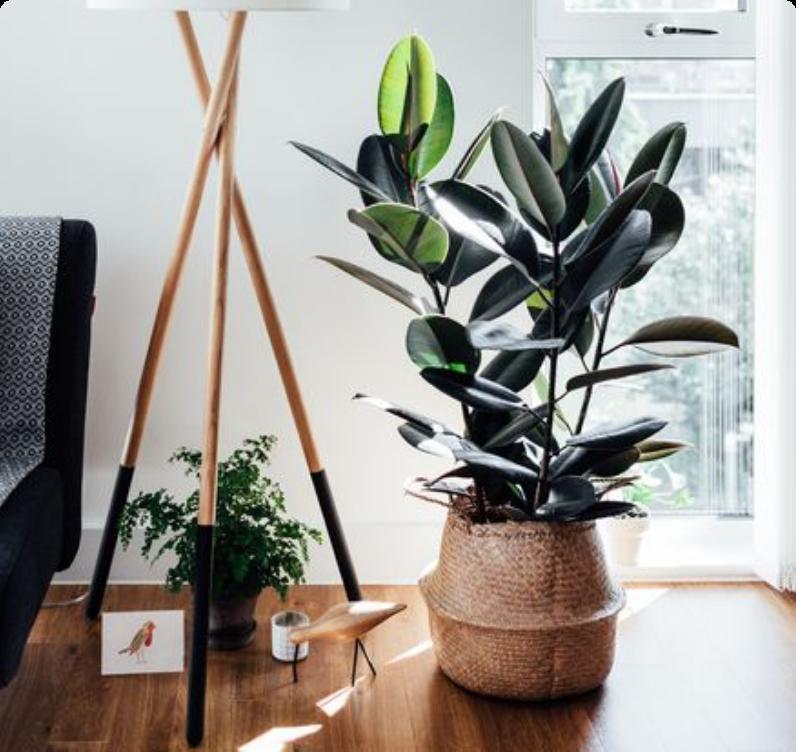 Plants for Living Room
